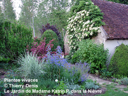 Les plantes vivaces les plantes vivaces for Plantes et arbustes vivaces